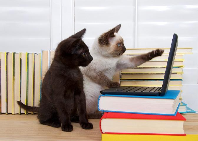 Lustige Fotos sind die eine Sache, das Verhalten der Katze richtig zu deuten ist aber mindestens genauso wichtig, damit man mit seinem Vierbeiner entspannt zusammen leben kann. (#31)