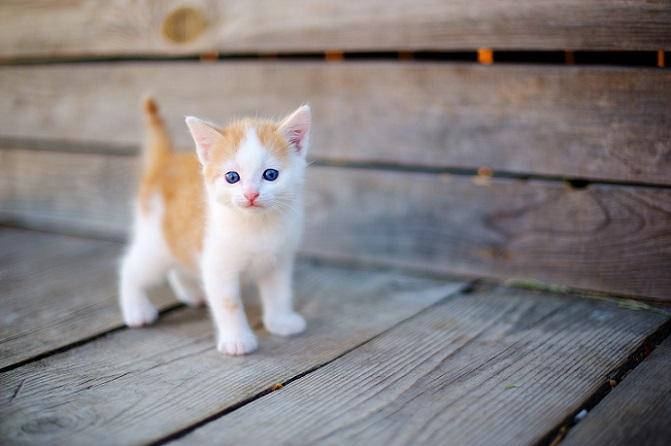 Die Katze setzt viele verschiedene Details ein, um ihre Stimmung deutlich zu machen. Wer diese Details deuten kann, der kann auch richtig auf die Samtpfote reagieren. (#32)