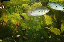 Neonfische - Eine Zierde für jedes Aquarium