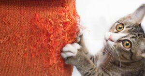 Ein weiteres sicheres Anzeichen für die Rolligkeit der katze ist das häufige Kratzen an Türen und Fenstern. Doch Vorsicht! Auch Sofa und Wand sind bei Samtpfote sehr beliebt. (#3)