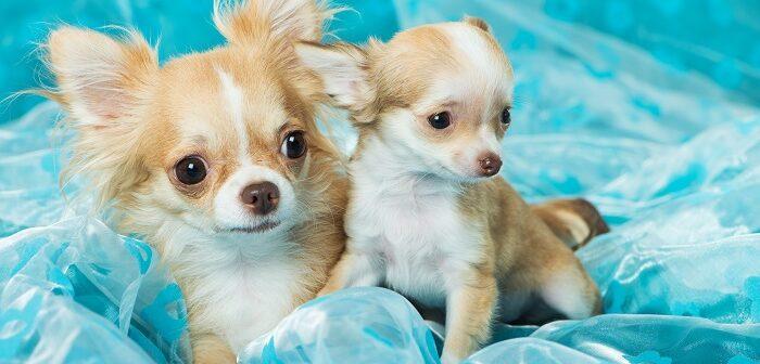 Was kostet ein Hund? Erstausstattung & laufende Kosten