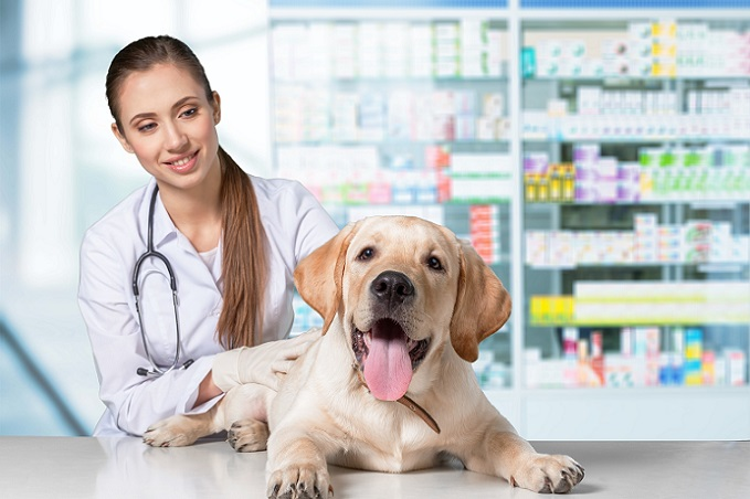 Beim Leben mit Hund kommen selbstverständlich auch laufende Kosten hinzu. So zählen dazu Futter und Tierarztkosten. (#03)