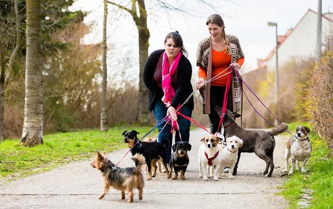 """Eine Hundehaftpflicht übernimmt Schäden, die das Tier """"verschuldet"""" hat. Hat sich der Hund beispielsweise von der Leine gerissen und rennt über die Straße, wodurch ein Unfall entsteht, so kommt die Versicherung für die Kosten auf. (#04)"""