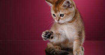 Was kostet eine Katze? Erstausstattung & laufende Kosten