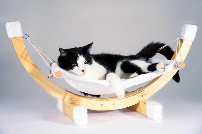 Katzen brauchen ihre Ruhe und nutzen dafür einen Rückzugsort. (#02)