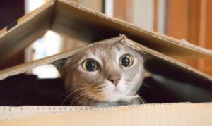 Katzen spielen für ihr Leben gerne. Sie spielen mit ihren Menschen - und auch mit ihrer Beute. (#1)