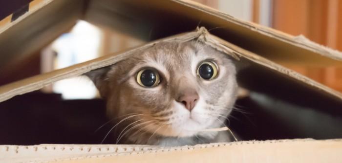 Katzen: 10 Spiele für drinnen