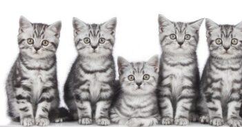 Katzenhaltung: 10 Tipps & die häufigsten Fehler