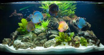 Aquaristik HH – die etwas anderen Haustiere