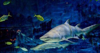 Erlebnis-Aquarium im Tierpark Hagenbeck: in Hamburgs Tropenwelt eintauchen