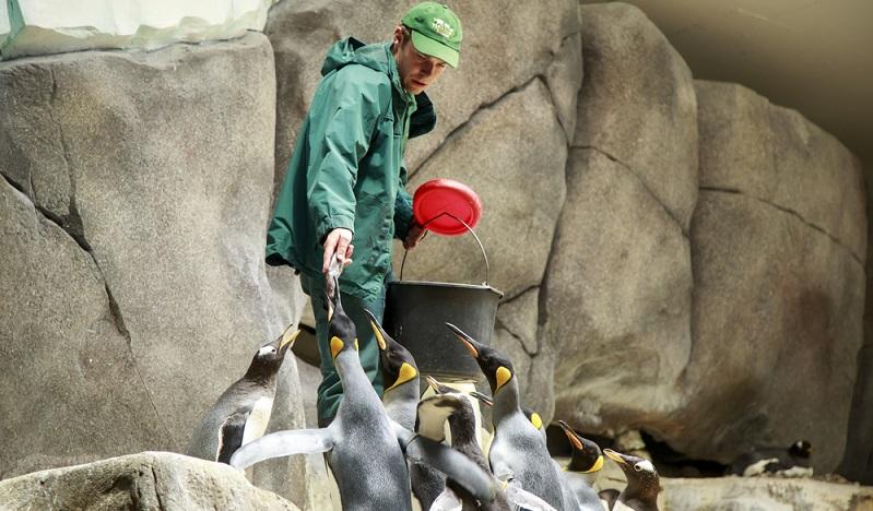 Ganz besonders beliebt bei Kindern: Das füttern der Pinguine in der Eismeerlandschaft (#01)