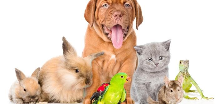 Haustiere kaufen: Tipps für einen erfolgreichen KaufHaustiere kaufen: Tipps für einen erfolgreichen Kauf
