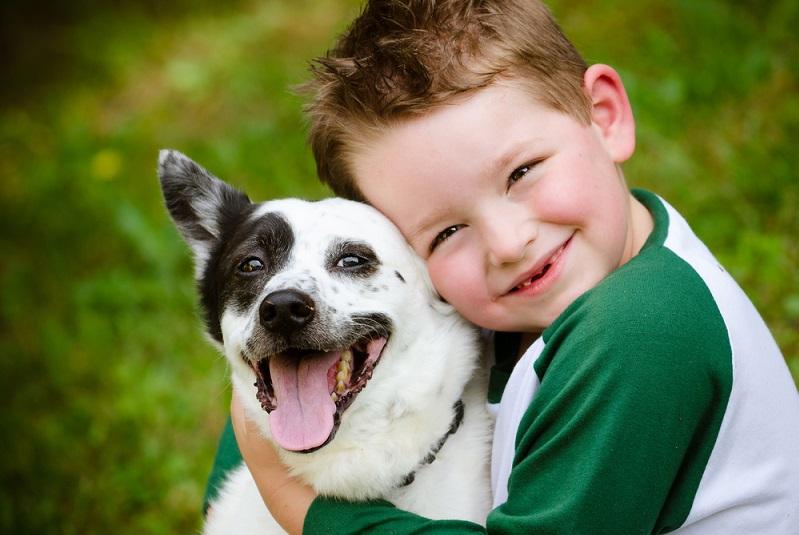 Der Hund ist neben der Katze das beliebteste Haustier in Deutschland und dabei wohl eines der Tiere, die am meisten Aufwand bedeuten. (#02)