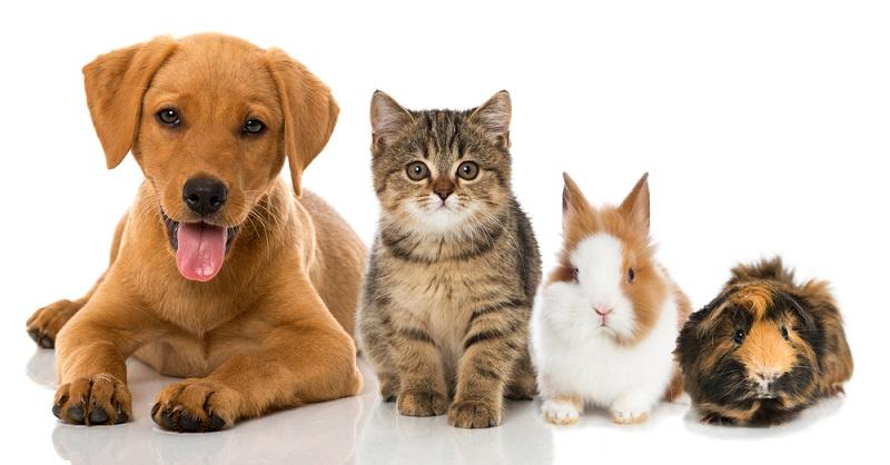 Haustiere sind mehr als nur ein nettes Kuscheltier. Häufig sind sie ein vollwertiges Mitglied der Familie. Haustiere kaufen kann aufgrund der großen Auswahl an potenziellen Haustieren und Anlaufpunkten für den Kauf recht stressig werden. (#01)