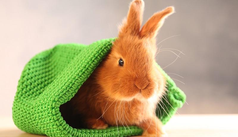 Kaninchen sind in der Haltung nicht so aufwendig wie Hunde oder Katzen und zudem muss man ein Kaninchen nicht dem Vermieter absprechen, wenn man in einer Mitwohnung wohnt. (#04)