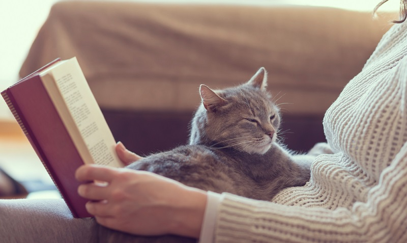 Katzen erfreuen sich wie Hunde großer Beliebtheit als Haustiere. Sie sind um einiges eigenständiger als Hunde und sind allgemeinen auch etwas günstiger im Unterhalt. (#03)