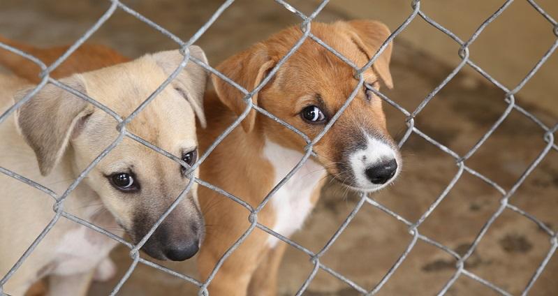 Wer Haustiere kaufen will, sollte sich zunächst erst einmal an das örtliche Tierheim wenden. Hier warten alle möglichen Tiere auf ein neues Zuhause. (#07)