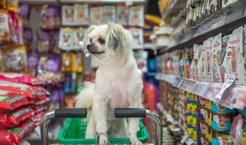Einer der bekanntesten Anbieter ist Fressnapf – ein Shop, der für Hund und Katze ebenso Angebote bereithält wie für das Kleintier oder für Vögel. Egal, ob Grundausstattung mit Liegekörbchen und Katzenbaum, ob tägliches Futter, Spielzeug, Snacks oder andere Produkte (#01)