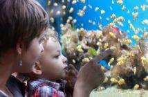 Aquarienfische in Hamburg – die pflegeleichten Haustiere