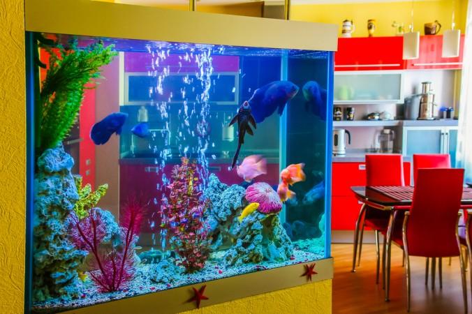 Ein besonderes Highlight: das Aquarium als Raumteiler bzw. als Raumdekoration mitten in den Raum integrieren, denn das gibt nicht nur einen optischen Reiz, sondern wirkt gleichzeitig beruhigend auf den Betrachter. (#1)