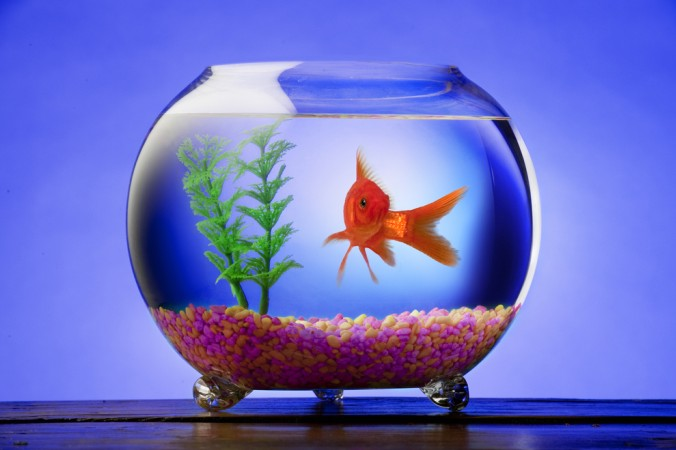 aquarienfische in hamburg. Black Bedroom Furniture Sets. Home Design Ideas