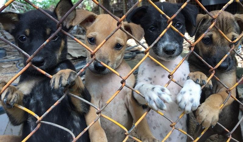 Ein Großteil der Hundewelpen stammt aus Aufzuchten in Osteuropa und kann nicht bis zu einem konkreten Hundezüchter zurückverfolgt werden. (#01)
