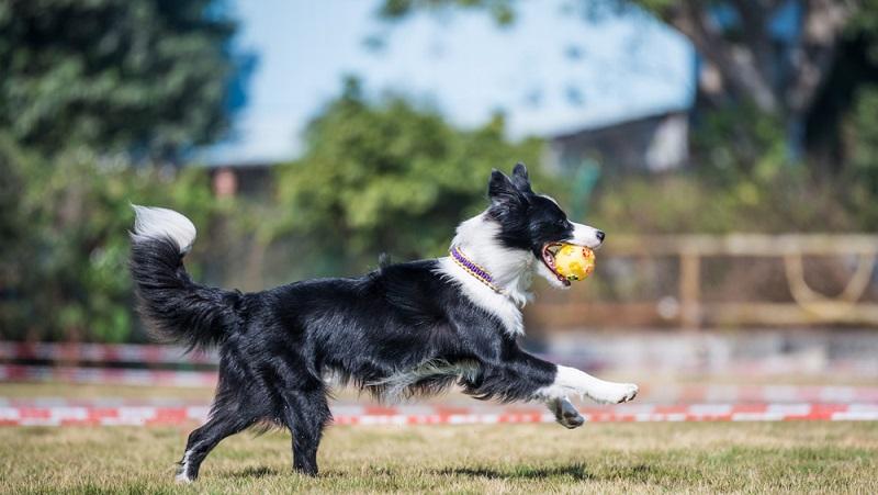 Hunde lieben es, hinter Bällen herzujagen. (#02)
