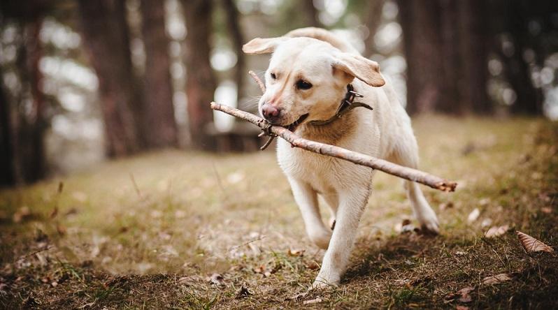 Einem Hund das Apportieren beizubringen, ist gar nicht so einfach. Doch, wenn es einmal sitzt, gibt es viele verschiedene Apportier-Varianten. Halter benötigen dazu einen Gegenstand, den sie wegschleudern können. (#04)