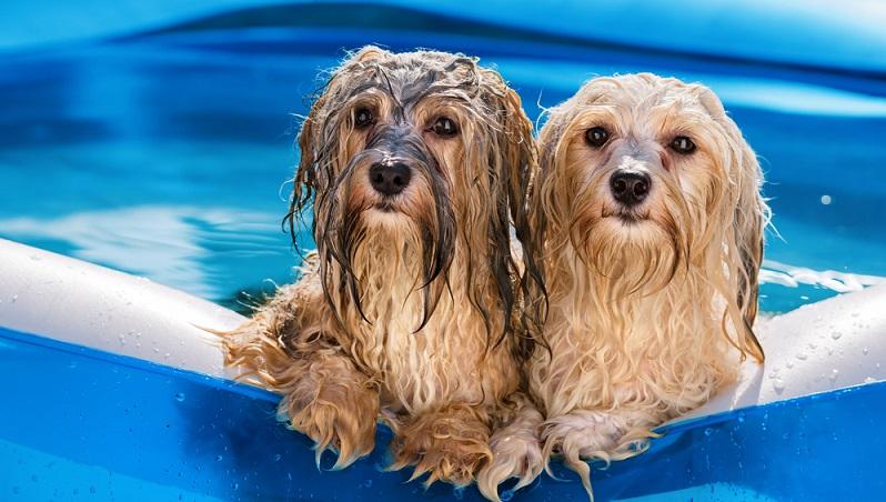 Wasserspiele im Sommer machen Spaß und bringen Abkühlung. #01)