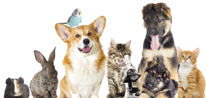 Steigende Umsätze bei Tiernahrung und Heimtierbedarf
