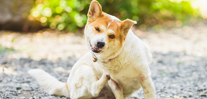 Allergien beim Hund: Konsequente Behandlung auf verschiedenen Wegen