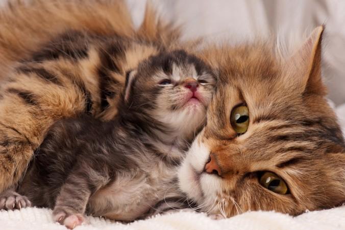 Zu Beginn verlassen die Baby Katzen ihre Mutter eigentlich nie. 12 Wochen sollten sie bei ihrer Mutter verbringen dürfen. Denn erst dann ist die erste Tapsigkeit verloren gegangen und die Versorgung mit Muttermilch beendet. (#2)