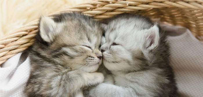 Baby Katzen: Richtiger Umgang mit dem tierischen Nachwuchs