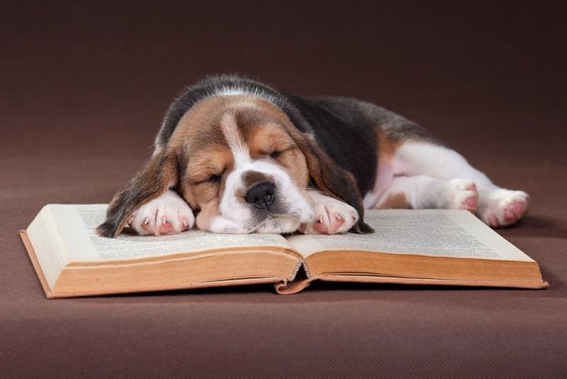 Es gibt heute im Internet und auch im Buchhandel eine wahre Fülle an Fachliteratur. (#03)