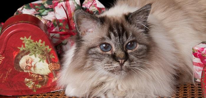 Tiere zu verschenken: So werden Besitzer und Tier gluecklich