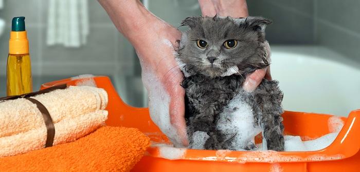 Katzen Pflege: Haltung, Nahrung und tiergerechter Umgang