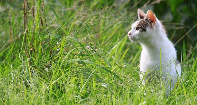 Ernähren sich die Tiere selbst (Freigänger), fressen sie in erster Linie kleinere Wirbeltiere. 15 bis 20 Mäuse am Tag sind dabei keine Seltenheit. Gerade wenn die größtenteils im Freien lebenden Tiere jagderfahren sind und dazu noch in ländlicher Umgebung bzw. in der Natur, leben.. (#02)