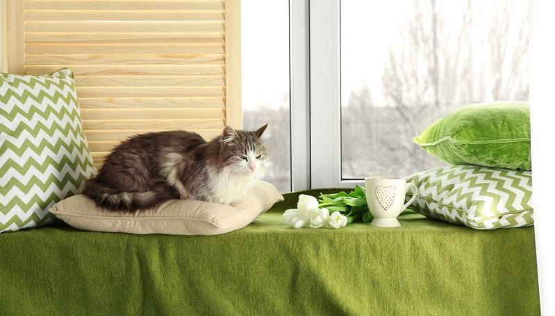 Ein wenig anders sieht es aus, wenn die Katze darauf angewiesen ist, das Fressen vom Mensch zu bekommen. Also auch bei der klassischen Hauskatze. Wichtig ist dann, dass bei der Zusammenstellung des Futters die Bedürfnisse und Anforderungen des tierischen Stoffwechsels berücksichtigt werden. (#03)
