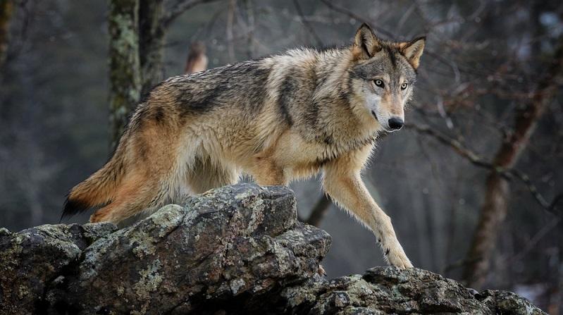 Grundsätzlich sind Haushunde Allesfresser. In Hinblick auf die Abstammung vom Wolf wird der Hund jedoch eher als Fleischfresser gesehen. (#03)