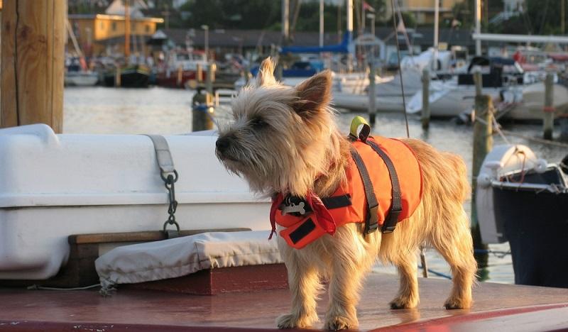 Dänemark liegt mit Schweden gleichauf. Auch hier eignen sich Landschaft und Klima für einen Trip mit Hund. (#02)