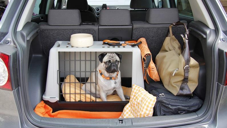 Der Hund muss an die Reise im Auto gewöhnt sein. Gut aufgehoben ist der Hund in einer speziellen Transportbox, im Autositz für Hunde, hinter einem Trenngitter oder gesichert mit einem Sicherheitsgurt. (#03)