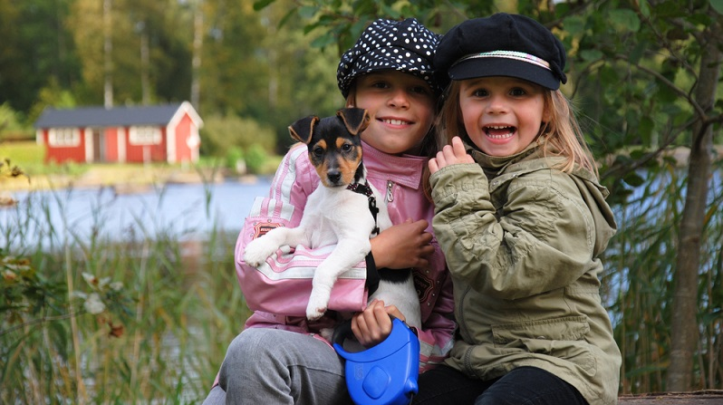 Die Geografie und das Klima Schwedens stehen bei Hundebesitzern hoch im Kurs. (#01)