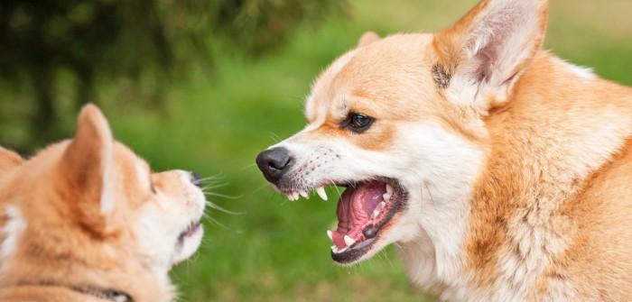 Hilfe! Mein Hund bellt! - 5 Tipps gegen häufiges Bellen