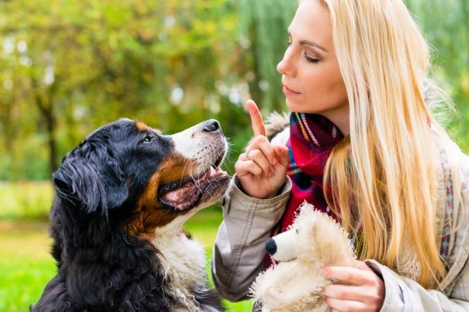 """Mit einigen Grundkenntnissen in optimaler Hundeerziehung kann man dem Hund an sich jedes erdenkliche Kommando beibringen. Genauso wie Sitz, Platz und Fuß, ist es auch möglich seinem Hund ein """"Bellen auf Kommando"""" beizubringen, oder ihn zum """"Bell-Stopp"""" aufzufordern. (#5)"""
