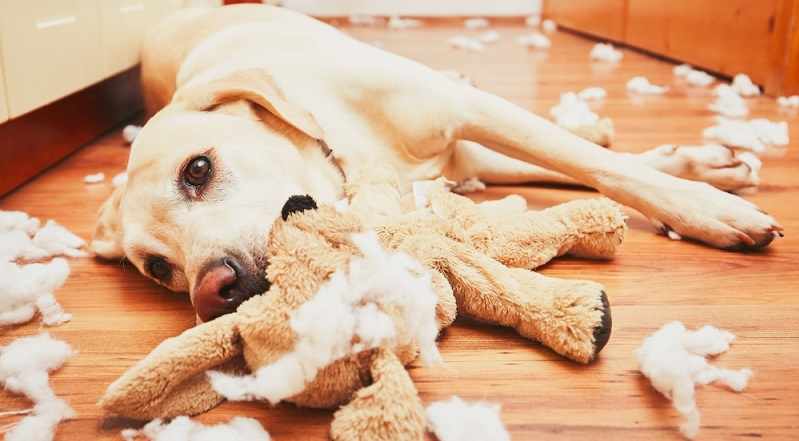 Findet der Besitzer beim nach Hause kommen häufig ein Schlachtfeld vor, kann dies darauf hindeuten, dass dem tierische Mitbewohner langweilig war. (#04)
