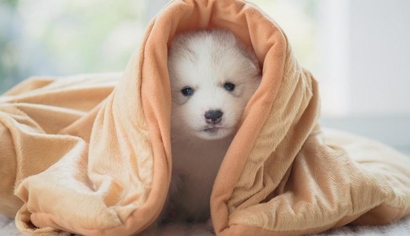 Wenn ein junger Hund neu in die Familie kommt, ist es am leichtesten, ihn an das Alleinsein zu gewöhnen. (#01)
