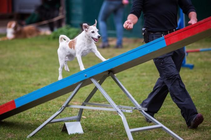 Wenn der Hund viel bellt, kann das ein Zeichen dafür sein, dass er nicht genug Bewegung / Auslauf hat. Ein ausgepowerter Hund ist müde und wird schon aus Müdigkeit deutlich weniger bellen. (#2)