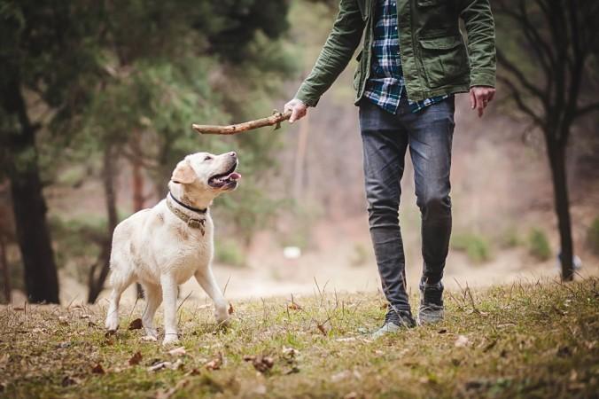 """Das Zauberwort gegen lästiges Bellen heißt Auspowern. Das kann in Form eines langen Spaziergangs geschehen. Aber auch """"Nasenarbeit"""" in der der Hund sich sein Futter erarbeitet, macht die meisten Hunde glücklich und müde. (#4)"""