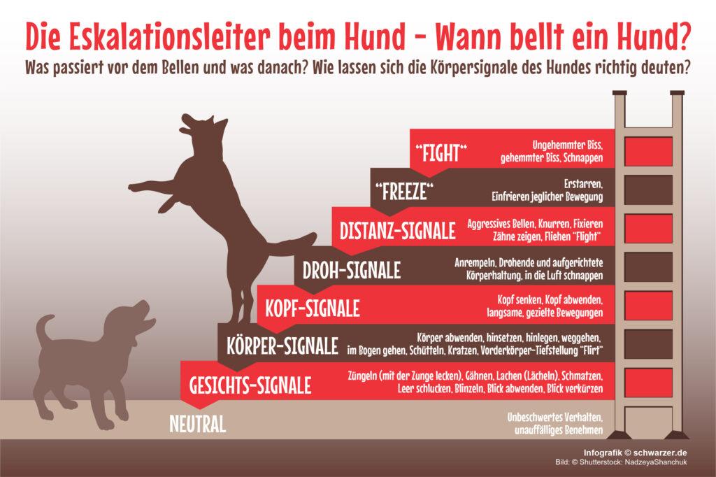 Infografik: Die Infografik zeigt die Eskalationsleiter beim Hund - Wann bellt ein Hund? Was passiert vor dem Bellen und was danach? Wie lassen sich die Körpersignale des Hundes richtig deuten?