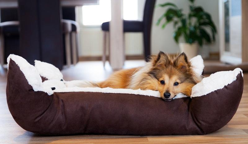 Bei einem Flohbefall muss alles absolut sauber gemacht werden, damit die Schädlinge ausgerottet werden. Man beginnt meistens mit dem Schlafplatz des Hundes. Kissen, Decken und Bezüge sollten gewaschen werden, und zwar so heiß wie möglich. (#04)